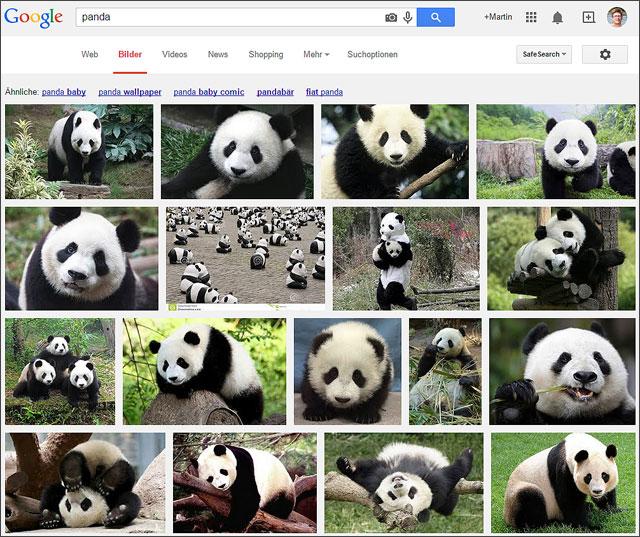 Panda in der Google Bildersuche