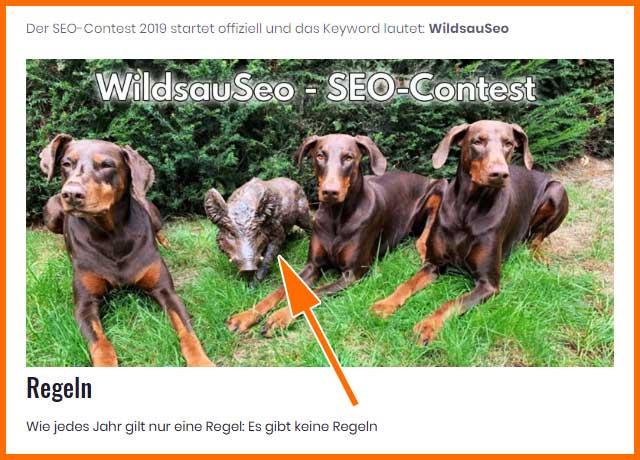 """Seo-Contest """"Wildsauseo"""" (Screenshot von der Ausrichterseite)"""