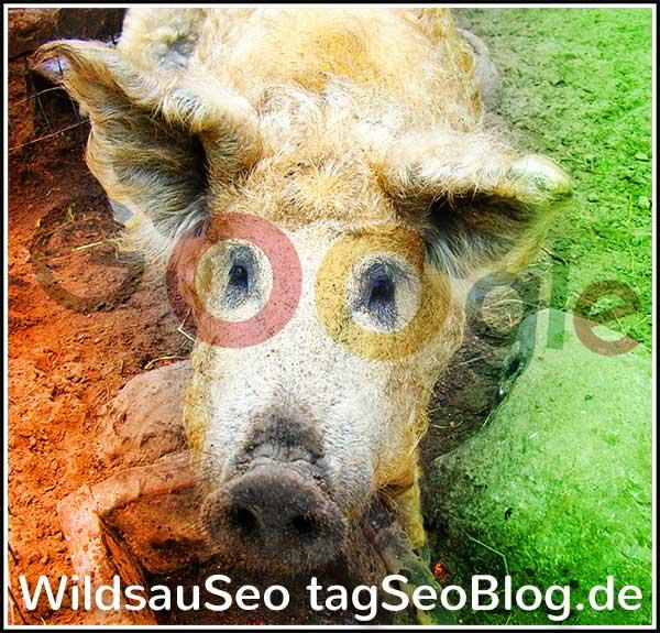 WildsauSeo (Foto) - Alles durch die Google-Brille